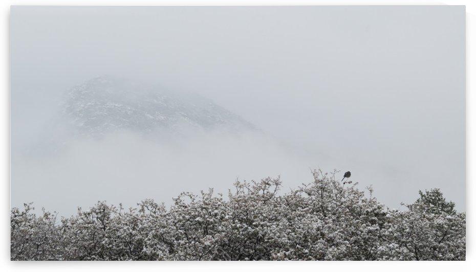 Bluebird in Snow 2VP by Vicki Polin