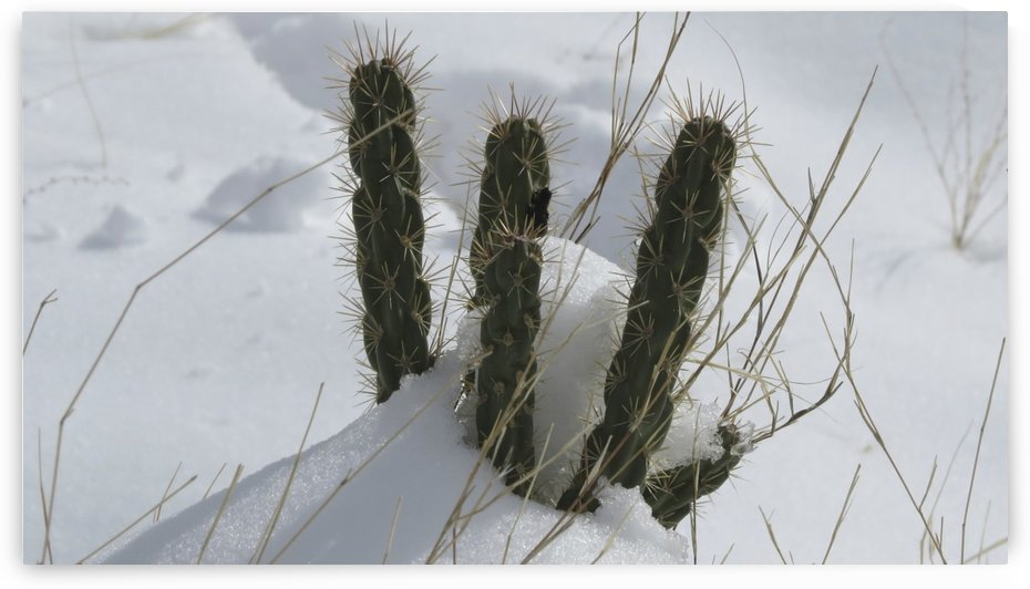 Cactus in the Snow 2VP by Vicki Polin