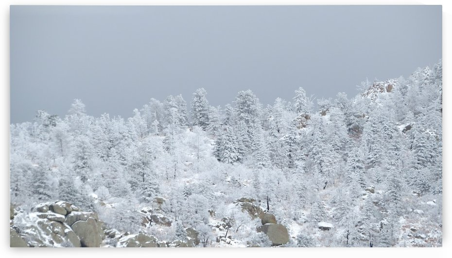 Sandia Mountains in the Snow 8 VP by Vicki Polin