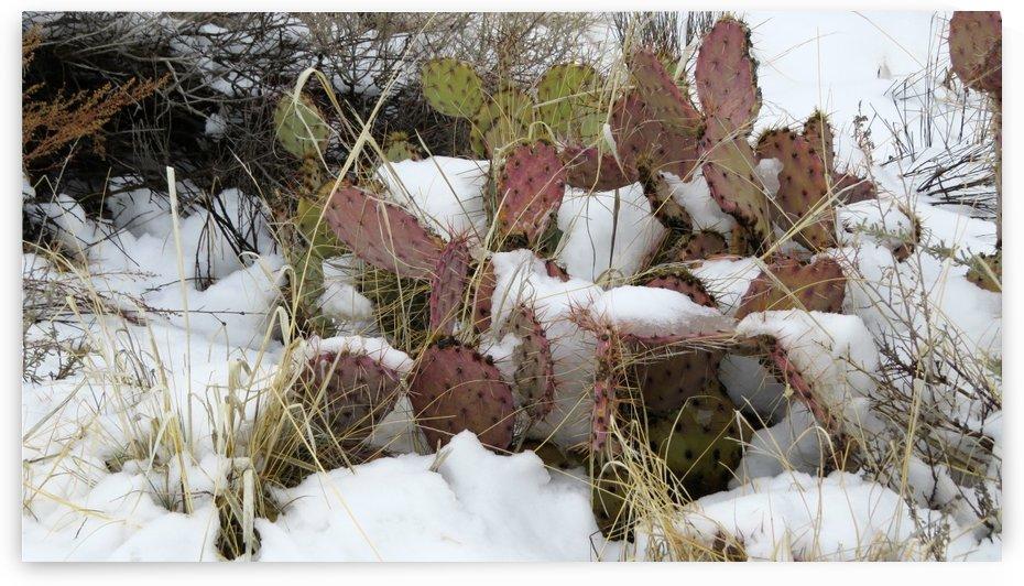 Cactus in the Snow 4VP by Vicki Polin