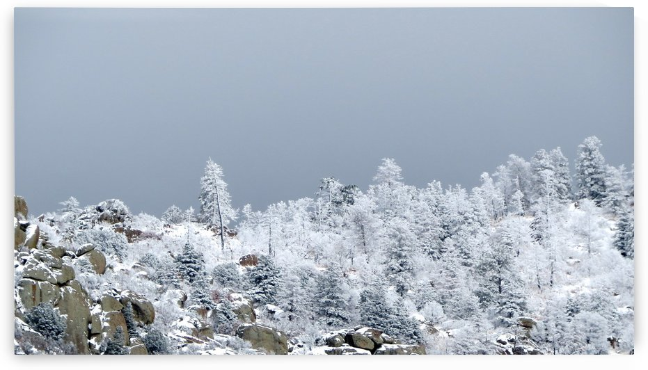 Snow in the Sandia Mountains 4VP by Vicki Polin