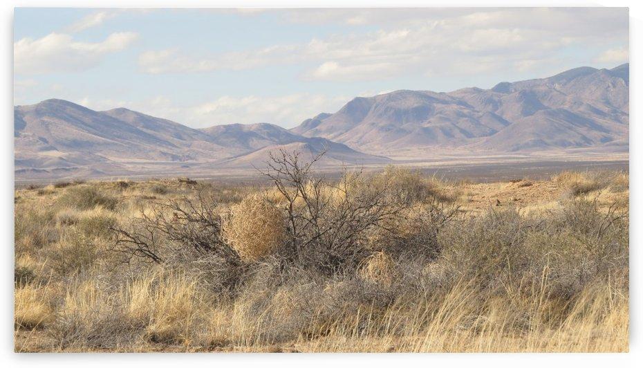 Landscape around Fort Craig VP1 by Vicki Polin