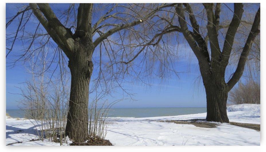 Gillson Beach in the Winter VP2 by Vicki Polin