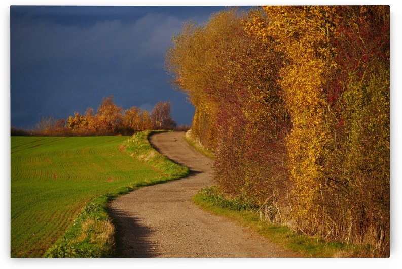 Autumn road by Andy Jamieson
