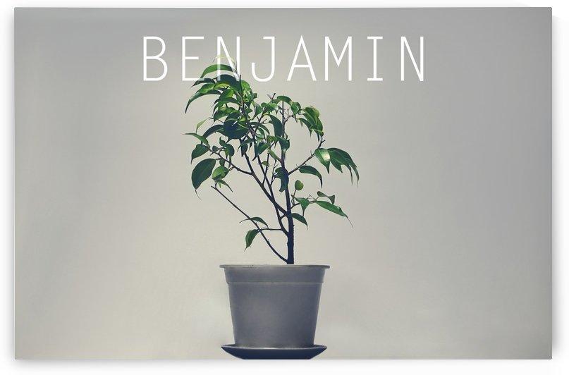 Benjamin by Marko Radovanovic
