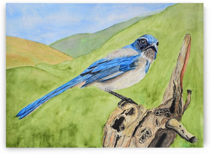 Blue Scrub Jay On Dead Tree by Linda Brody