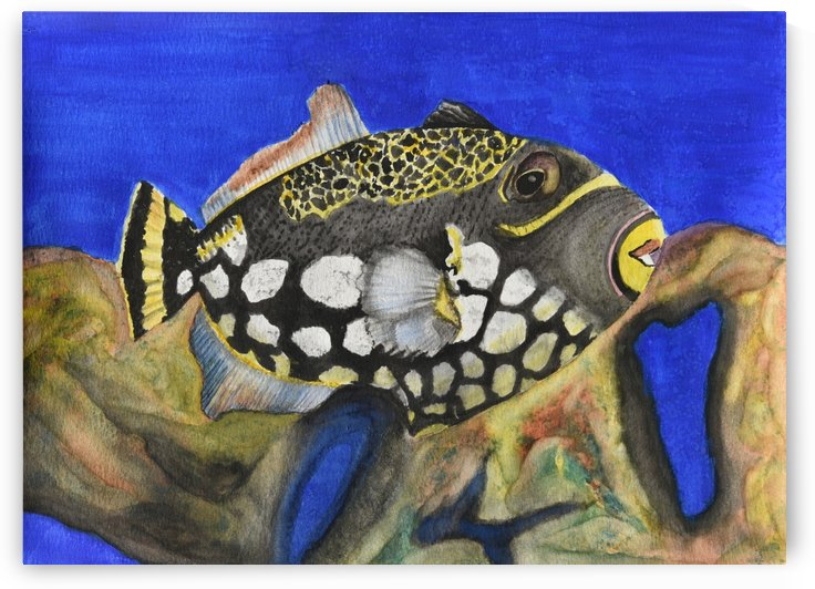 Clown Triggerfish by Linda Brody