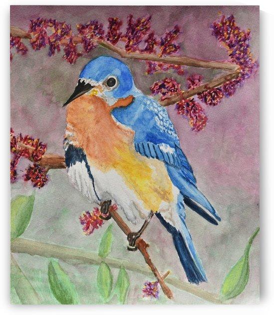 Eastern Bluebird  by Linda Brody