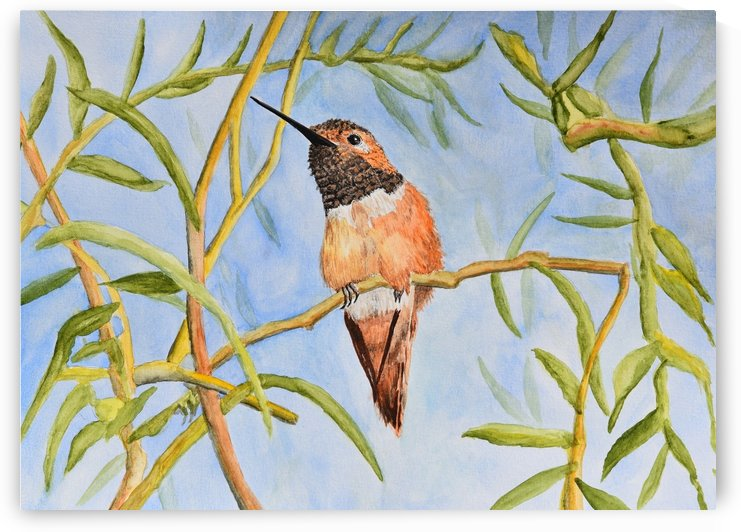 Sweet Hummingbird  by Linda Brody