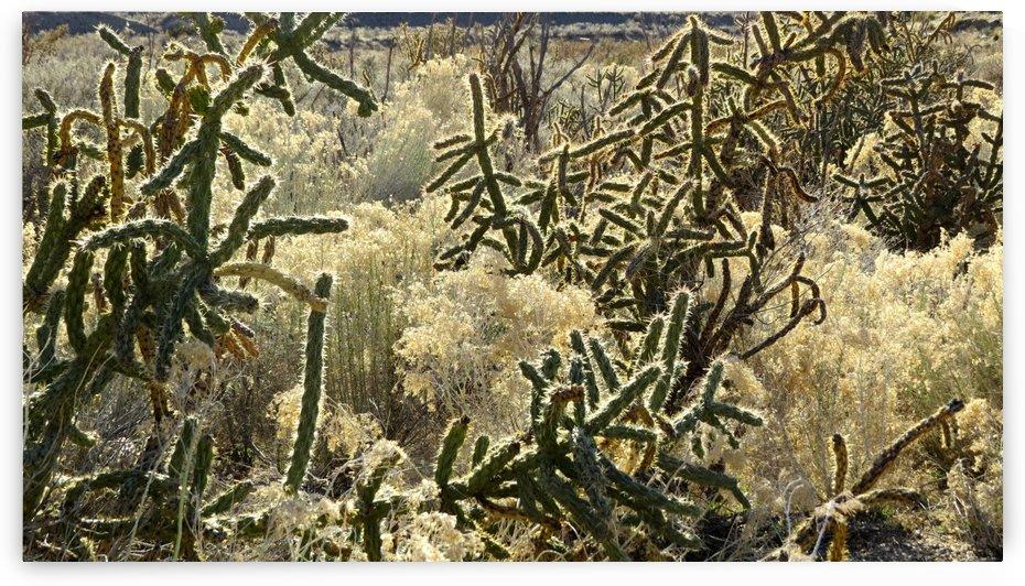 Shimmering Cactus VP3 by Vicki Polin