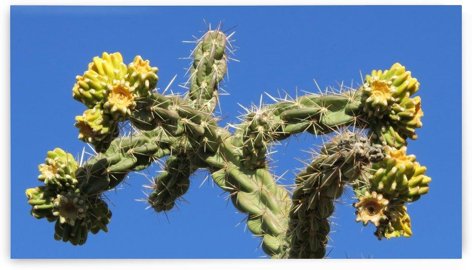 Cactus in bloom by Vicki Polin