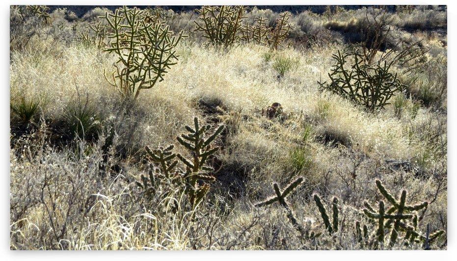 Shimmering Cactus VP2 by Vicki Polin