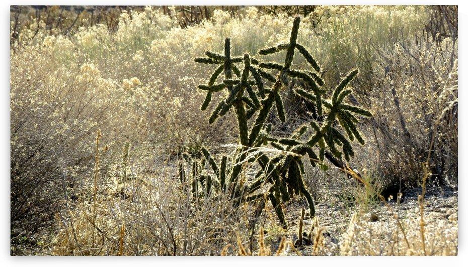 Shimmering  Cactus VP1 by Vicki Polin