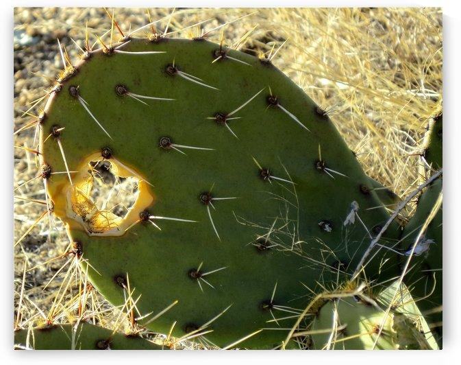Holy Cactus VP1 by Vicki Polin