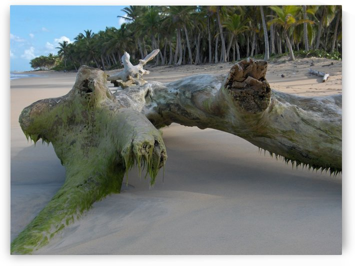 Tree On Beach 2 by Ohio In Print