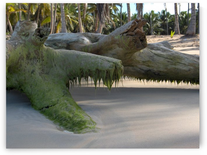Tree On Beach by Ohio In Print