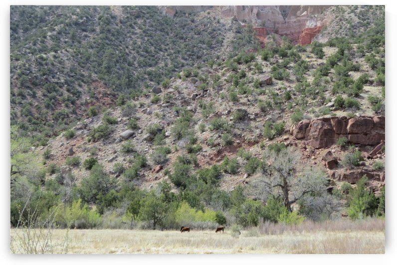 Jemez Mountains VP31 by Vicki Polin