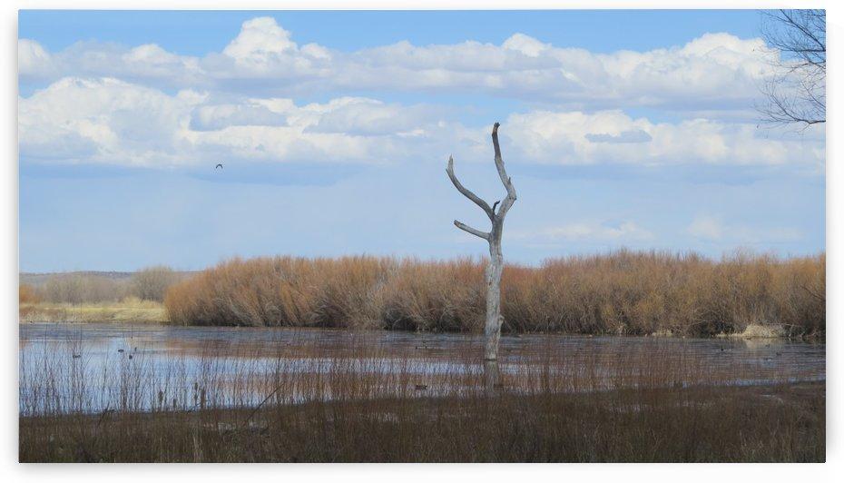 Bosque del Apache Nature Wildlife Refuge VP7 by Vicki Polin