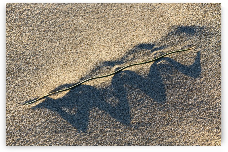 Grass Blade and Serpent Shadow by John Foster