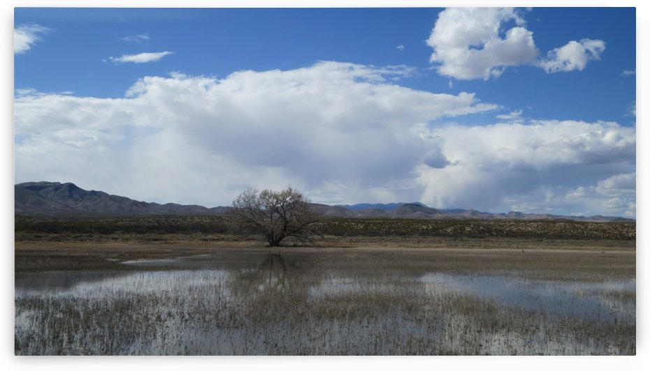 Bosque del Apache Nature Wildlife Refuge VP3 by Vicki Polin