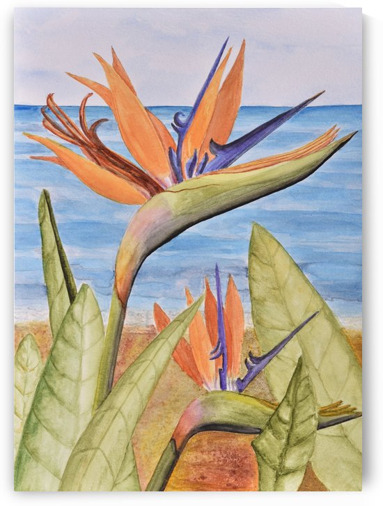 Bird of Paradise by Linda Brody