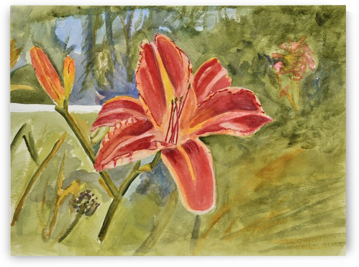 Orange Lily by Linda Brody