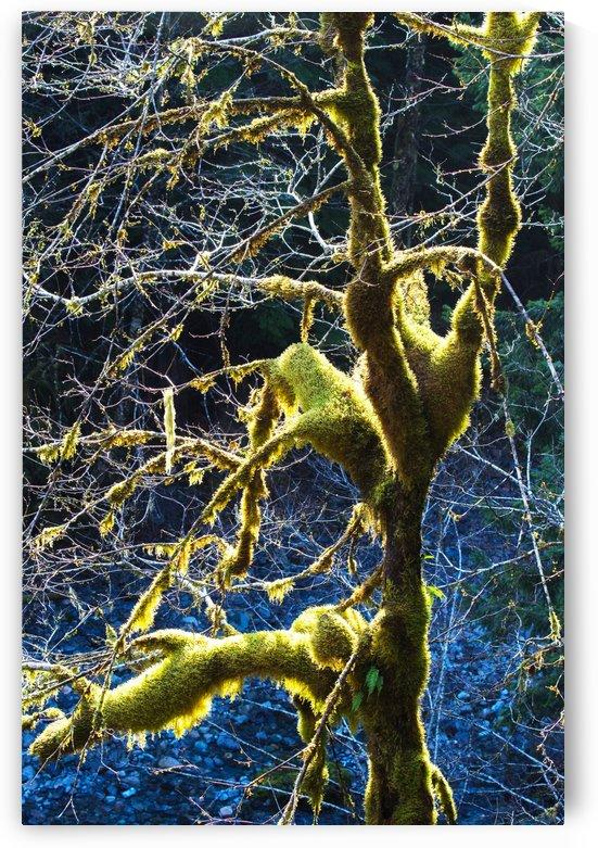 Rain Forest Tree In Winter by John Foster