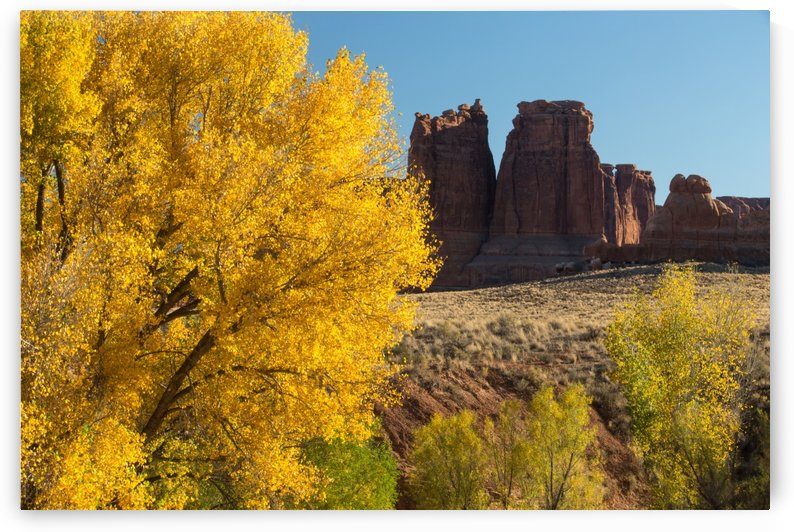 Fall at Courthouse Wash by John Foster