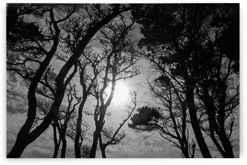 Arboreal Sky by John Foster