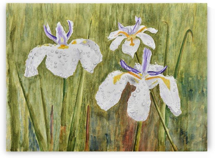 Three Irises In the Rain by Linda Brody