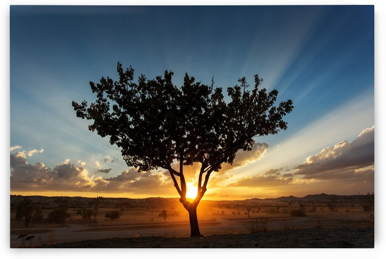 Tree on sunset in Cappadocia by MIRICA DAN-ALEXANDRU