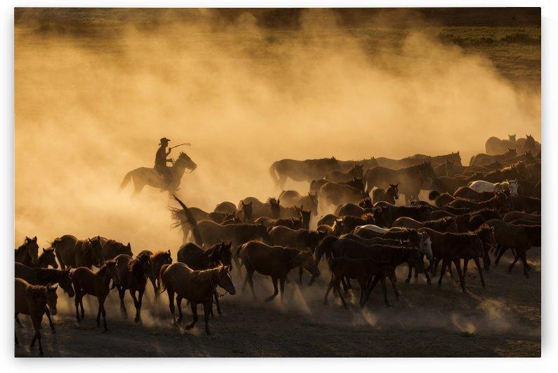 Western cowboys riding horses, roping wild horses by MIRICA DAN-ALEXANDRU