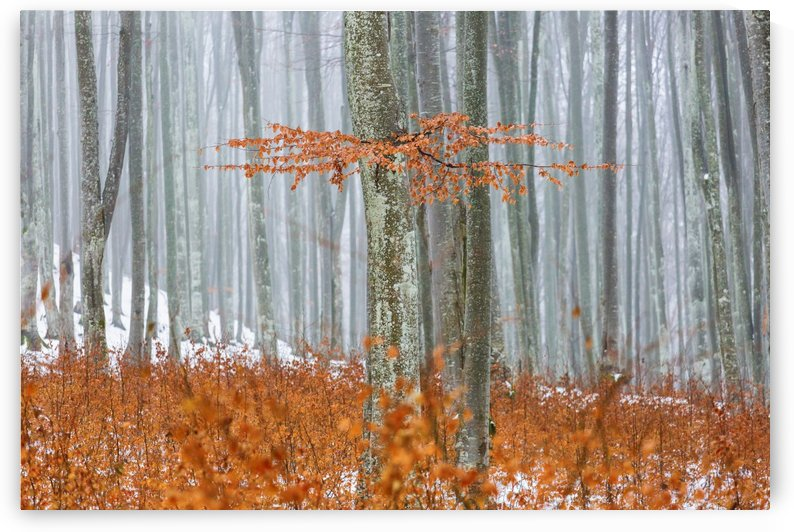 In the middle of forest in winter time by MIRICA DAN-ALEXANDRU