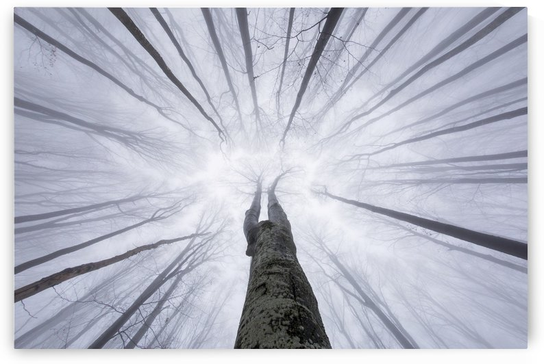 Tree from below in the middle of forest by MIRICA DAN-ALEXANDRU
