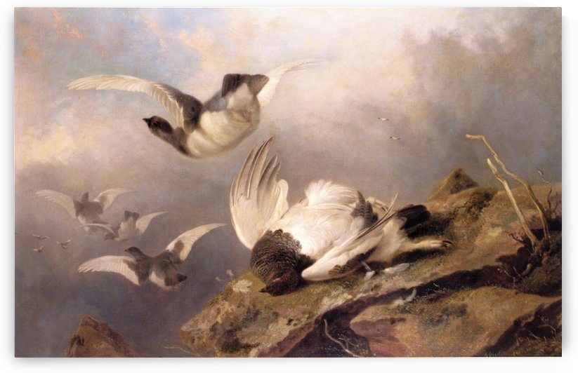 Birds by Richard Ansdell