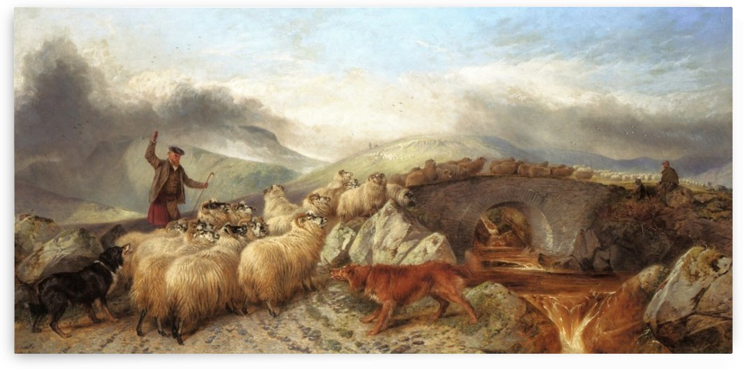 Sheep for Clipping in the Highlands by Richard Ansdell