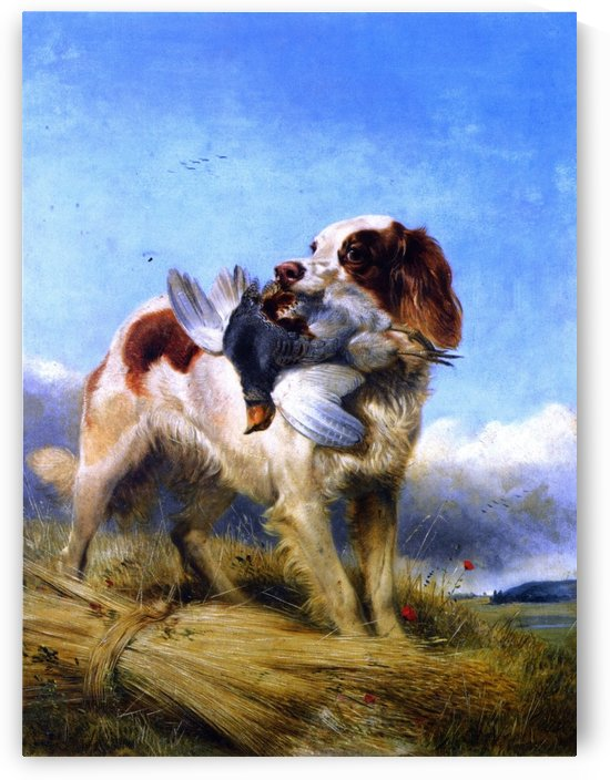 An English Setter Retrieving Partridge by Richard Ansdell