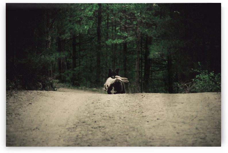 Mixed feelings by Marko Radovanovic