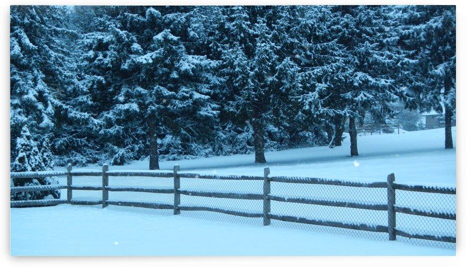Winter Snow by Mark Fierschnaller