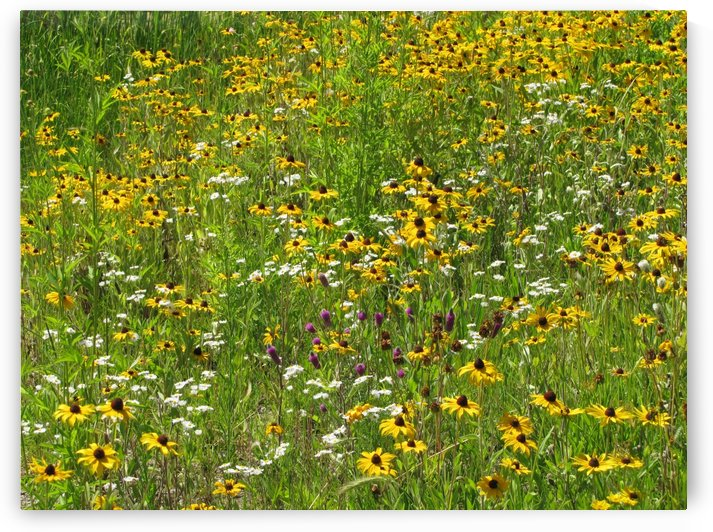 Wildflowers in Lincoln Park VP2 by Vicki Polin