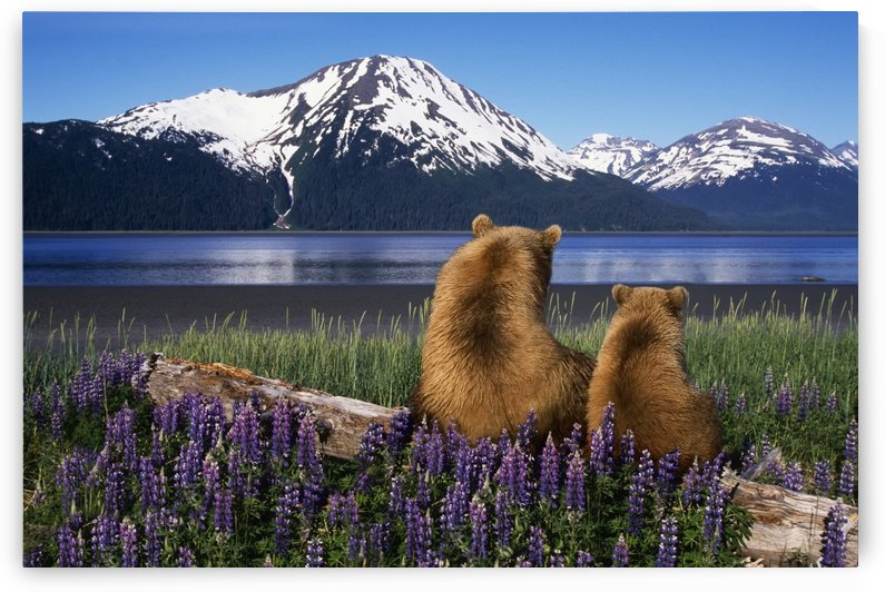 Grizzly Sow & Cub by Printscapes