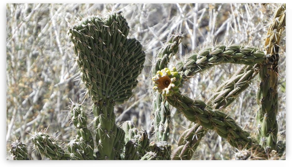 Cactus in the Sandia Mountains VP1 by Vicki Polin