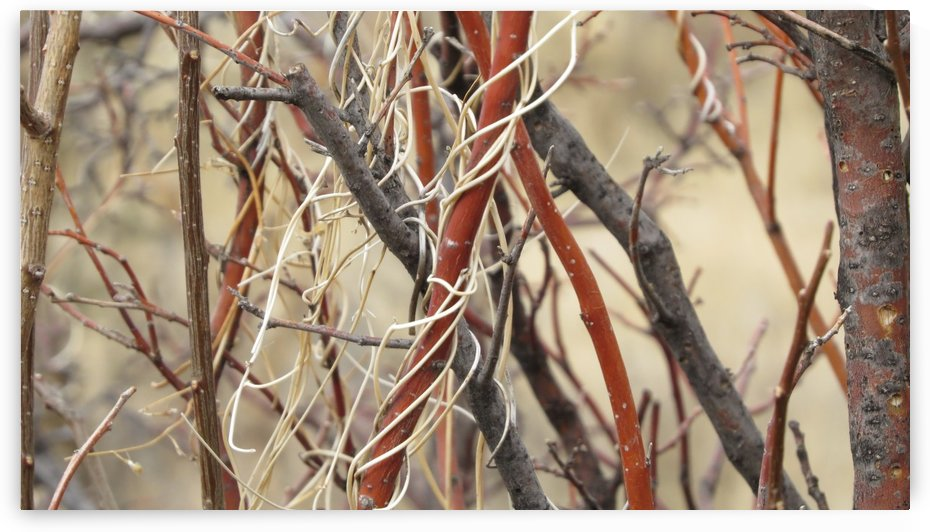 Twigs in the Sandia Mountains VP1 by Vicki Polin