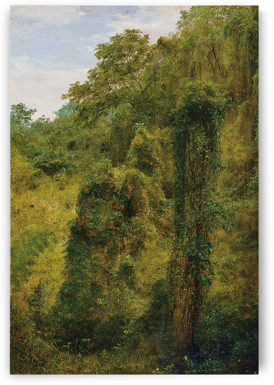 View of a forest in Jamaica by Frederic Edwin Church