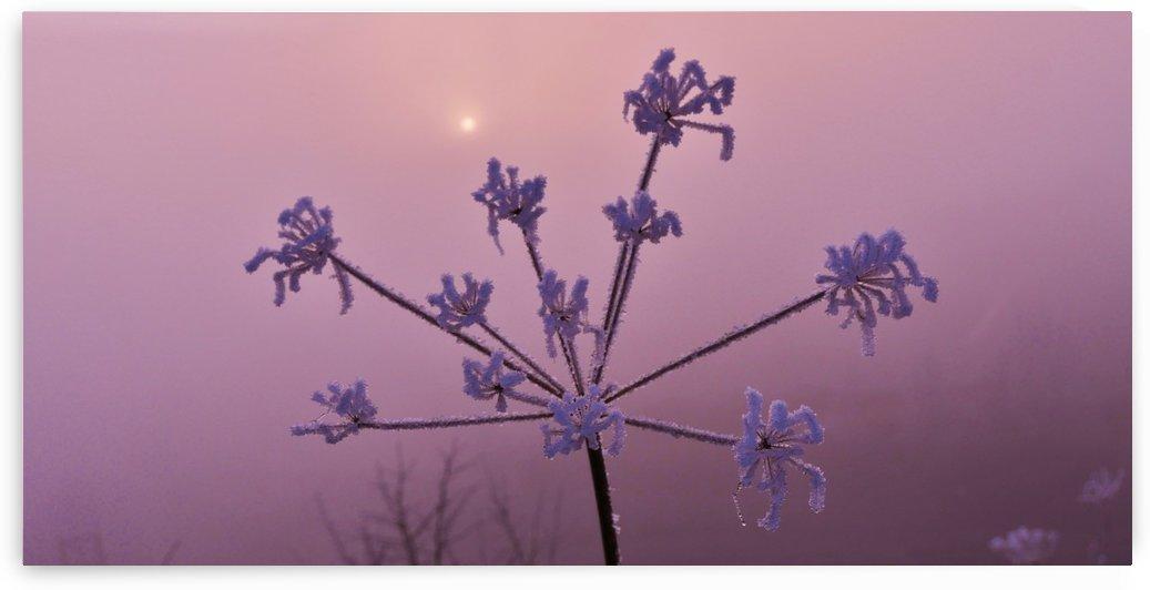 Weak weed sun by Andy Jamieson