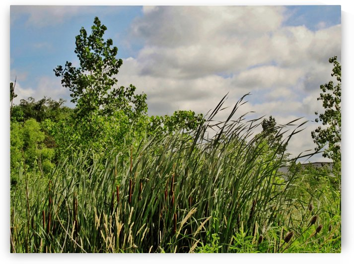 Cattails In The Wind by Don  Baker