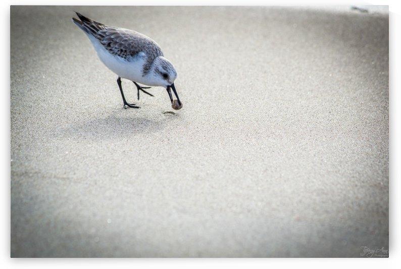 Bird IV by Tiffany Ross