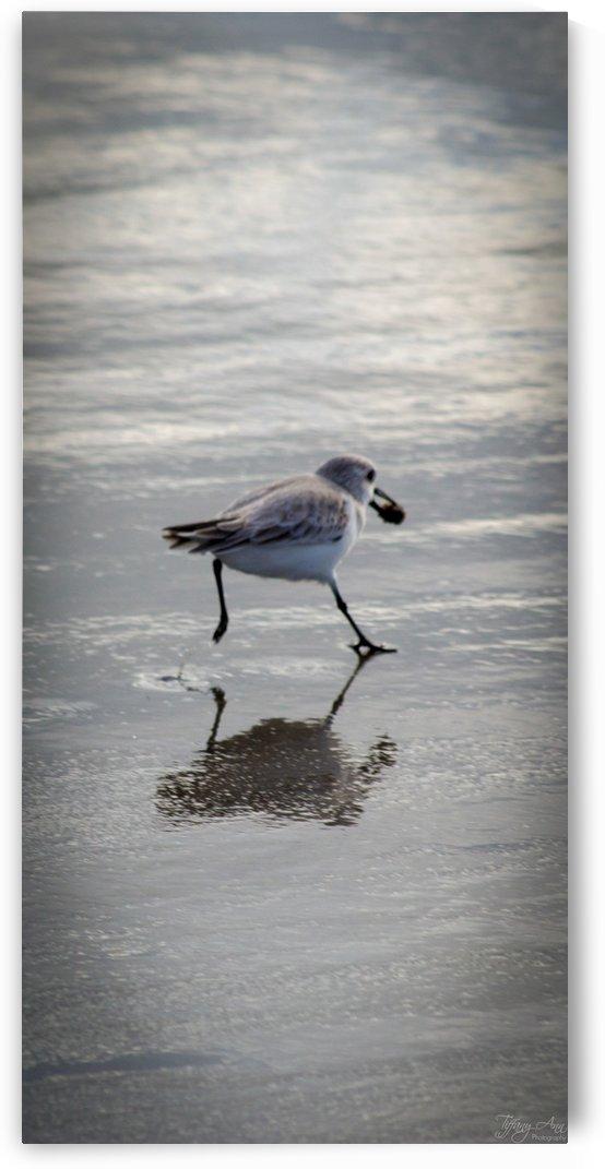 Bird II by Tiffany Ross