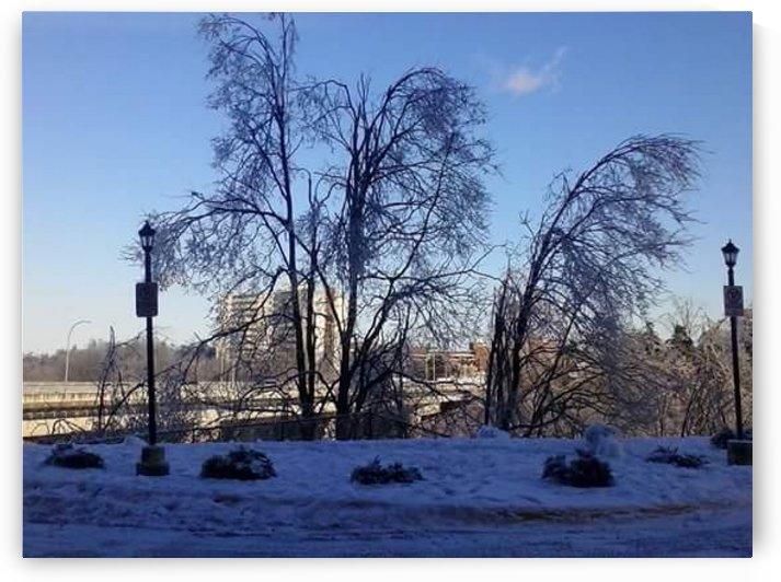 Ice storm in Toronto by Kayathiri Vaithilingam