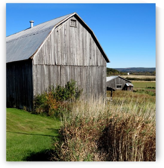 Cattle barn, Penobsquis, NB, Oct. 6, 2013 by Doug McQuinn